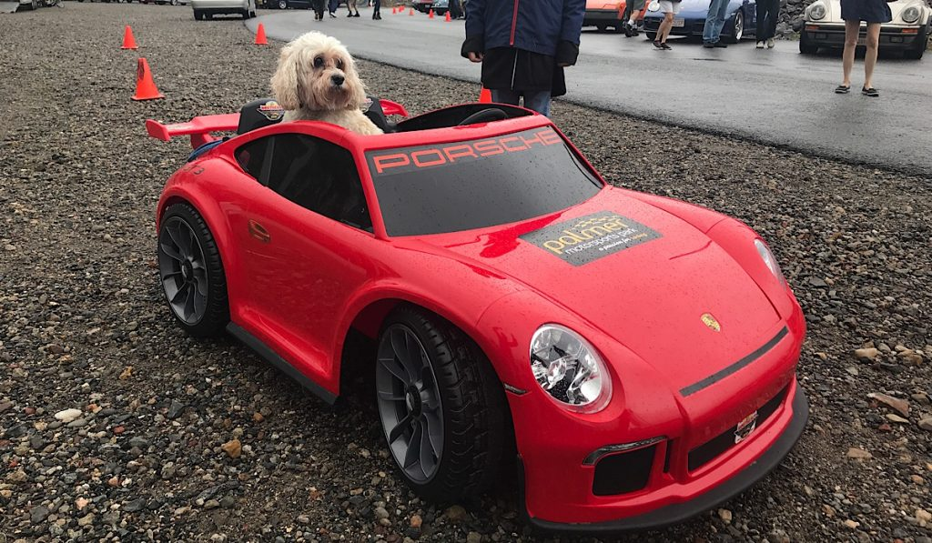 dog friendly palmer motorsports park